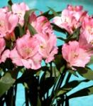 buque-de-noiva-significado-alstromelias-blog-eccentric-beauty