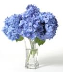 Hydrangeas in vase